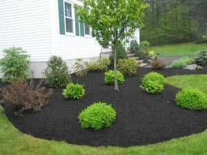 Premium Black Mulch Great Highlight To Greenery Or Flowers