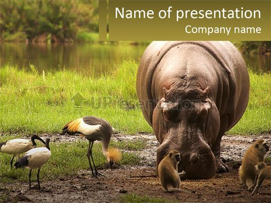 hippo bird animal powerpoint template | free templates for, Modern powerpoint