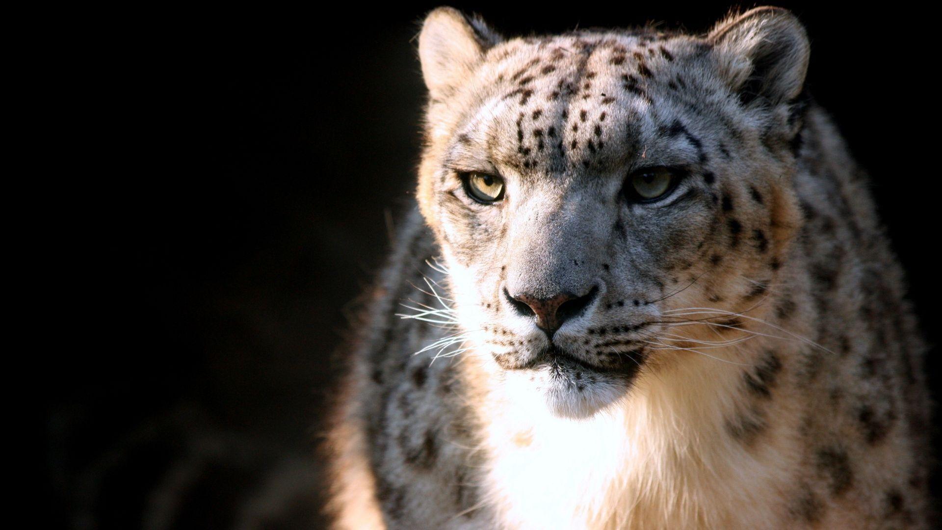 Snow leopard download full version