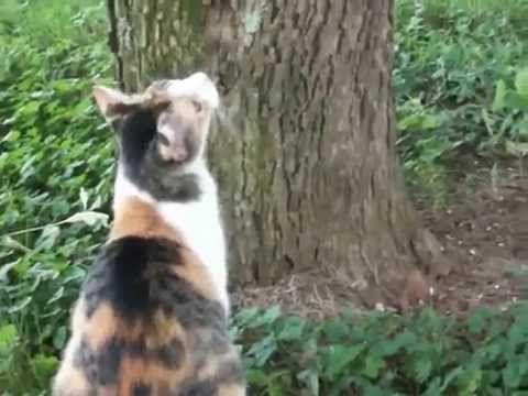 Mamãe tentando resgatar o filhote preso na árvore