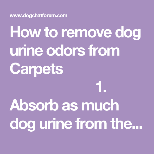 How To Remove Dog Urine Odors From Carpets 1 Absorb As