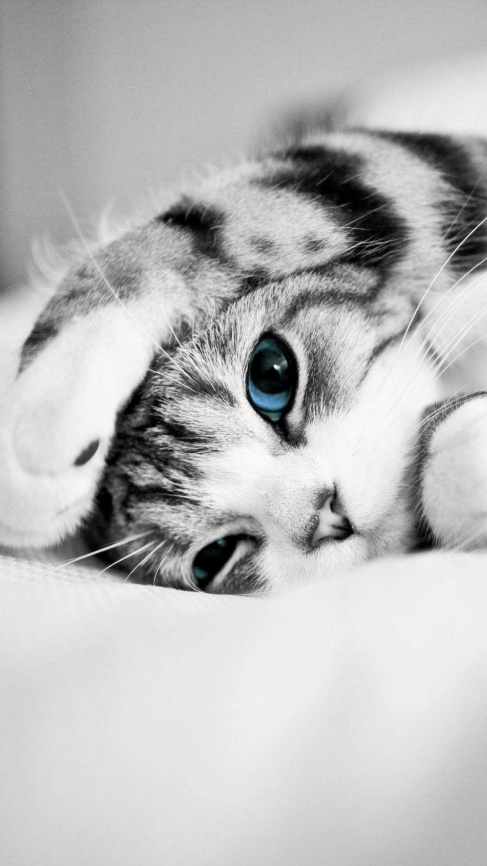 Adorable Cute Blue Eyed Kitten Zwierzęta, Kocięta i Kociaki