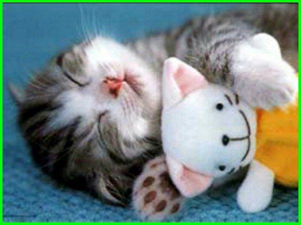 Download 98+ Gambar Kucing Imut Paling Bagus Gratis