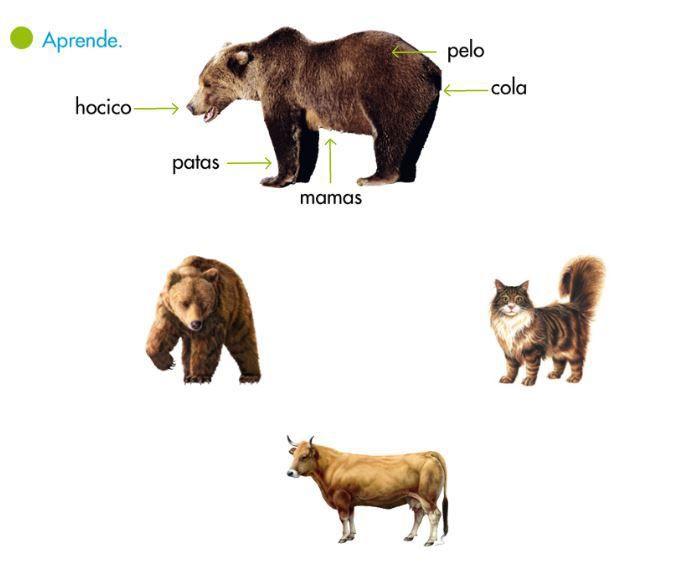 Los Mamíferos 2do Grado Material De Aprendizaje Animales Viviparos Mamíferos Seres Vivos E Inertes