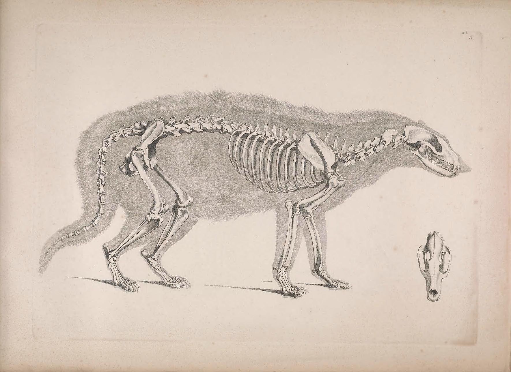 336 best anatomia images on Pinterest