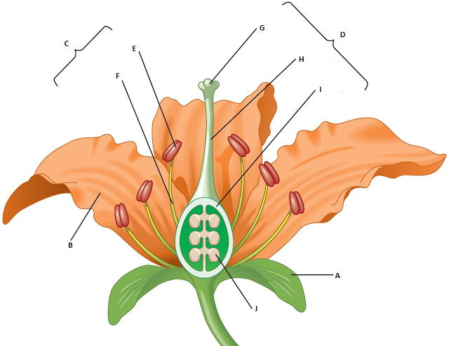 Biology MCQ Quizzes Parts of a flower, Flower structure