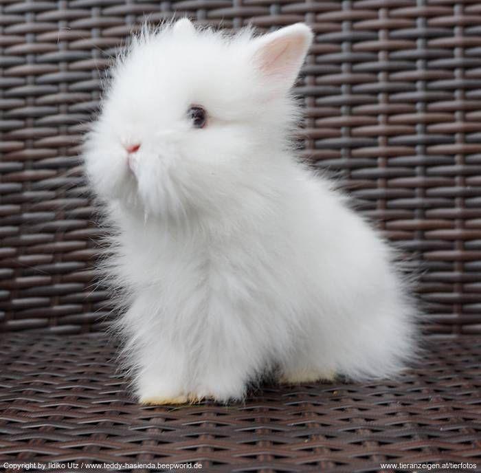 Teddyzwergbaby bunny Süße tiere, Baby kaninchen, Babytiere
