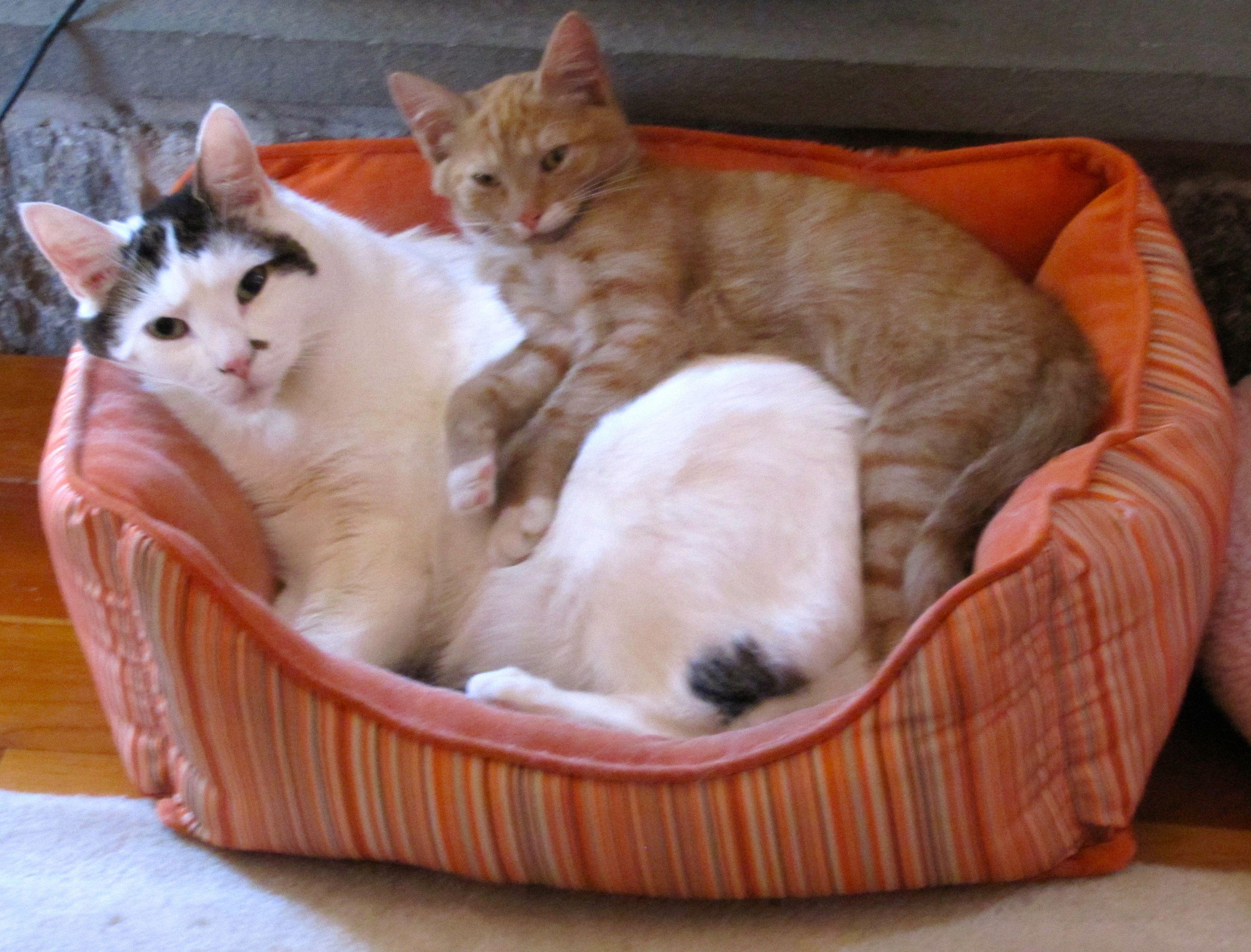 Brotherly Love Brotherly love, Animals, Furry