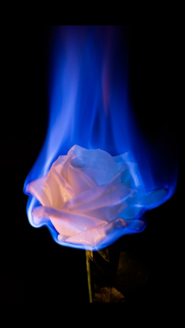 Aesthetics Dark Blue in 2020 Rose on fire, Aesthetic