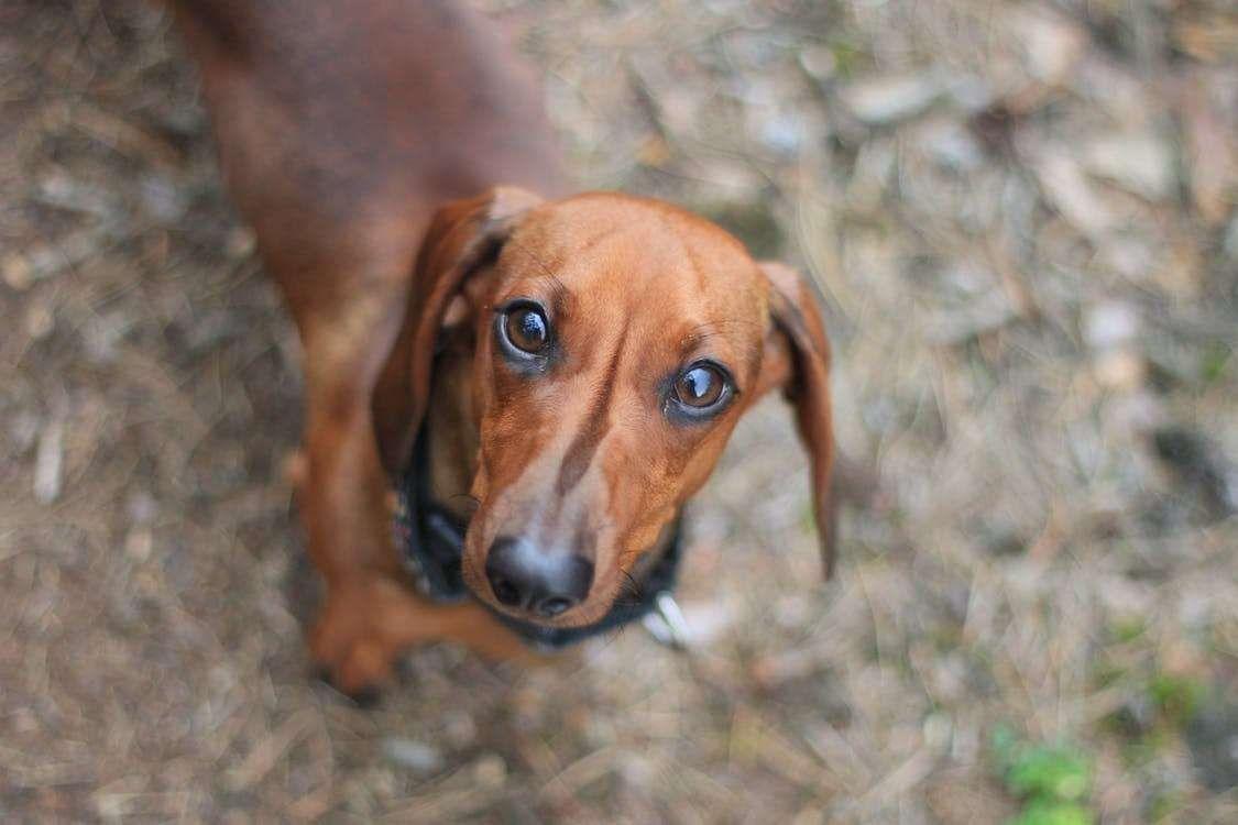 Dog Training Many Individuals Feel That Dog Training Is Tough
