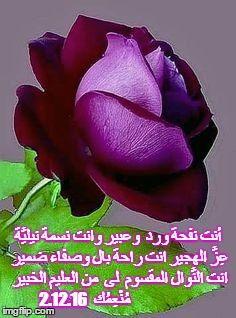 أنت نفحة ورد وعبير وانت نسمة نيلي ة ع ز الهجير انت راحة بال وصفاء ضمير انت الن وال المقسوم لى من العليم الخبير م ن ع Purple Flowers Purple Roses Flowers