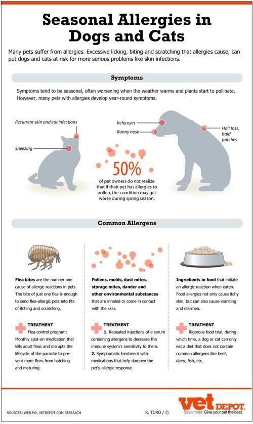 Seasonal Allergies In Cats And Dogs Pet Allergies Seasonal
