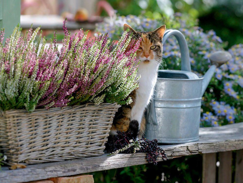 Herbst Deko Oh Du Schone Heide Bunter Blumenkasten Pinterest