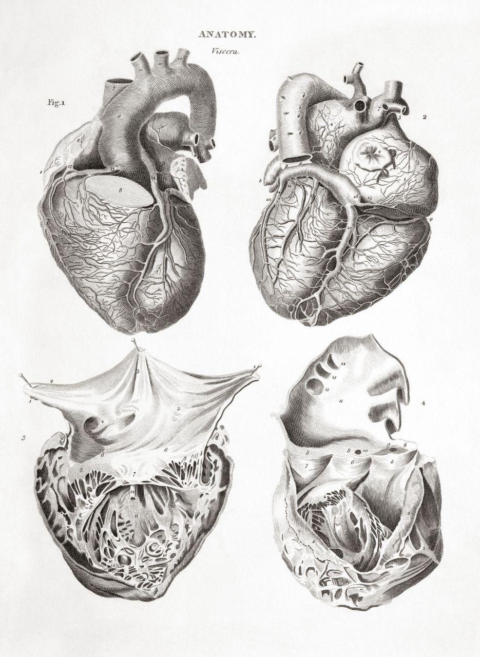 Human Anatomy Anatomy Art Exhibit Human Body Anatomy For Artists