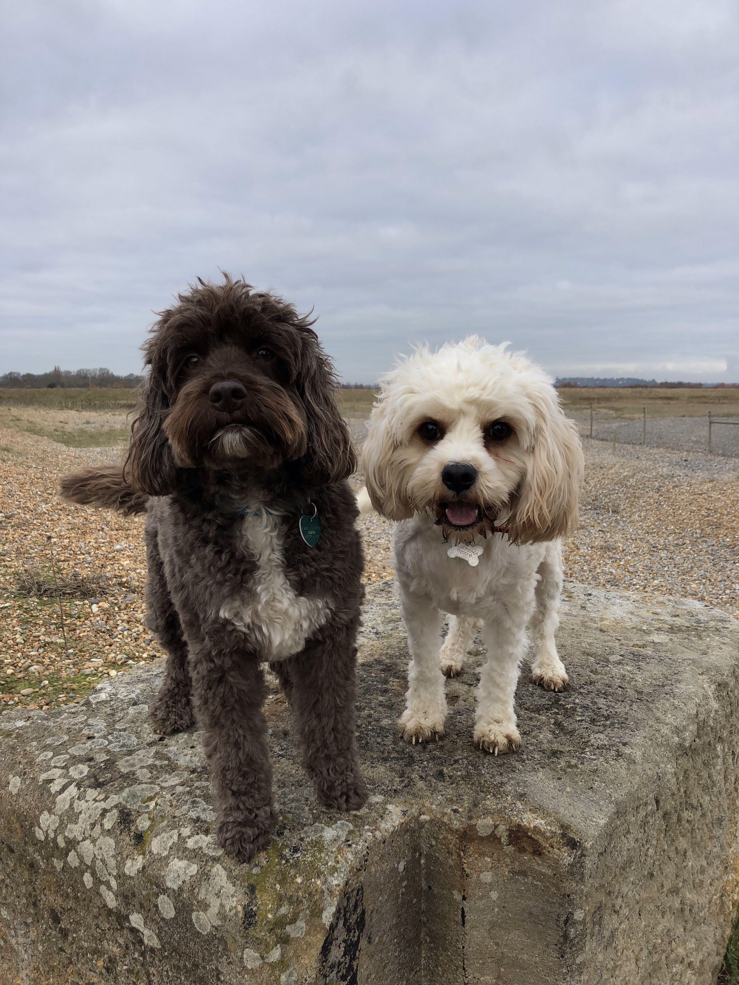 Experienced Dog Walking Doggy Daycare Local Pet Care Services Friendly Reliable Affordable And Fully Insured Check Dog Walking Services Dog Walking Dogs