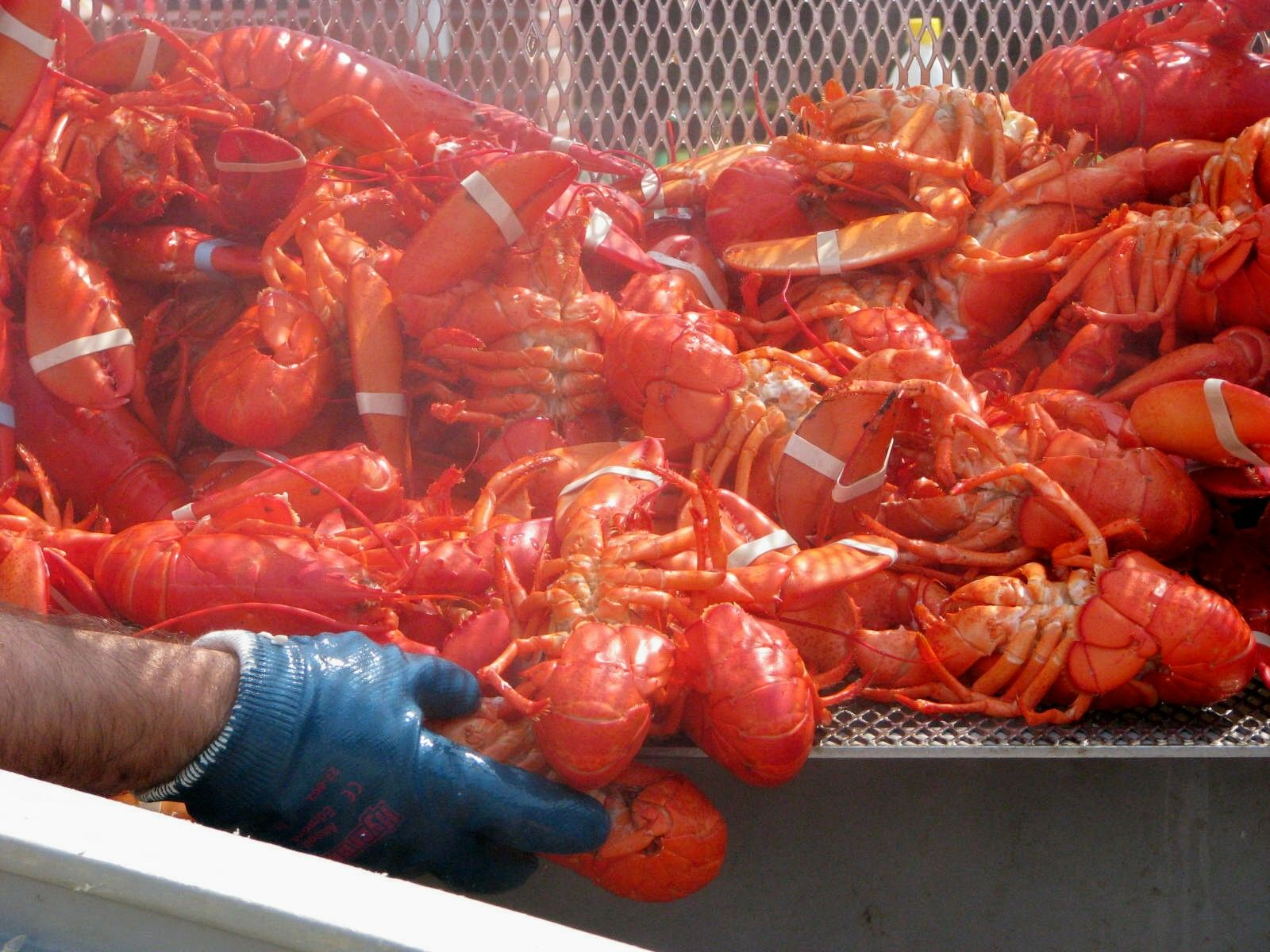 Pin By Summermaine Vacation Rentals On Dining Out On Maine S Midcoast Maine Lobster Festival Maine Lobster Maine