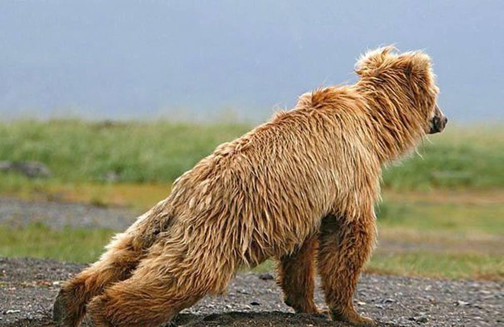 25 animali che potrebbero insegnarvi lo yoga - Corriere.it
