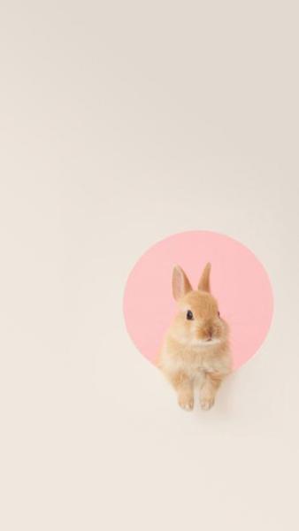 Cute Iphone Wallpapers Bunny Wallpaper Rabbit Wallpaper Pink Rabbit Wallpaper
