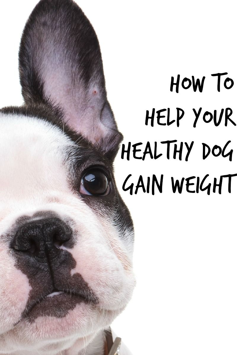 how to tell if dog is healthy weight