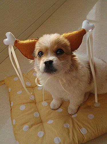 Costumes For Cats Nurse Dog Costume Christmas Halloween Pet