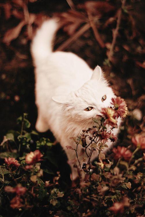 Gatos e flores.. tudo de bom!!