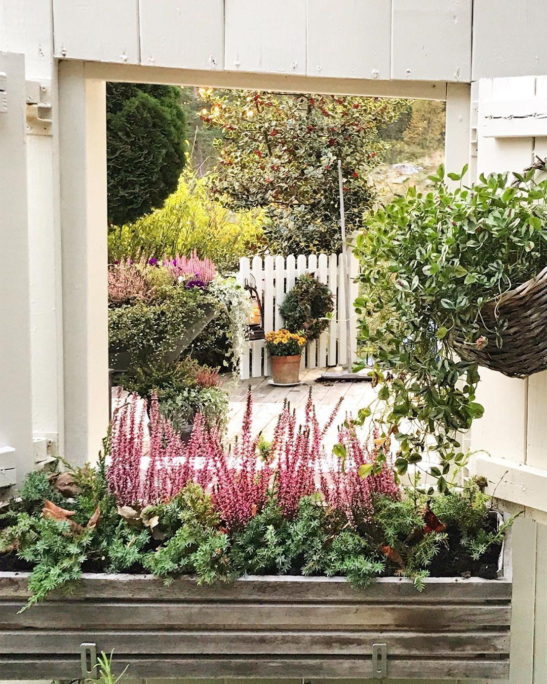 Høst i haven 🍂________________________________________#høst #minhage #uterom #hage #blomsterglede #lyng #utelivoghagerom #garden #gardendecor #gardenlovers #garten #gartendekoration #minlandstil #landliv #landligstil #hverdagsglede #minmagi #outdoordecor #mycountrygarden #landhausgarten #minträdgård #autumn #trädgårdsliv #homeandgarden #meinschönergarten #vintagegarden #instagarden #countrystyle #trädgårdsinspiration #fall
