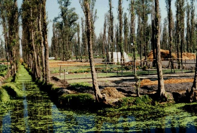 The Chinampa Zone of Xochimilco | Floating garden, Urban ...