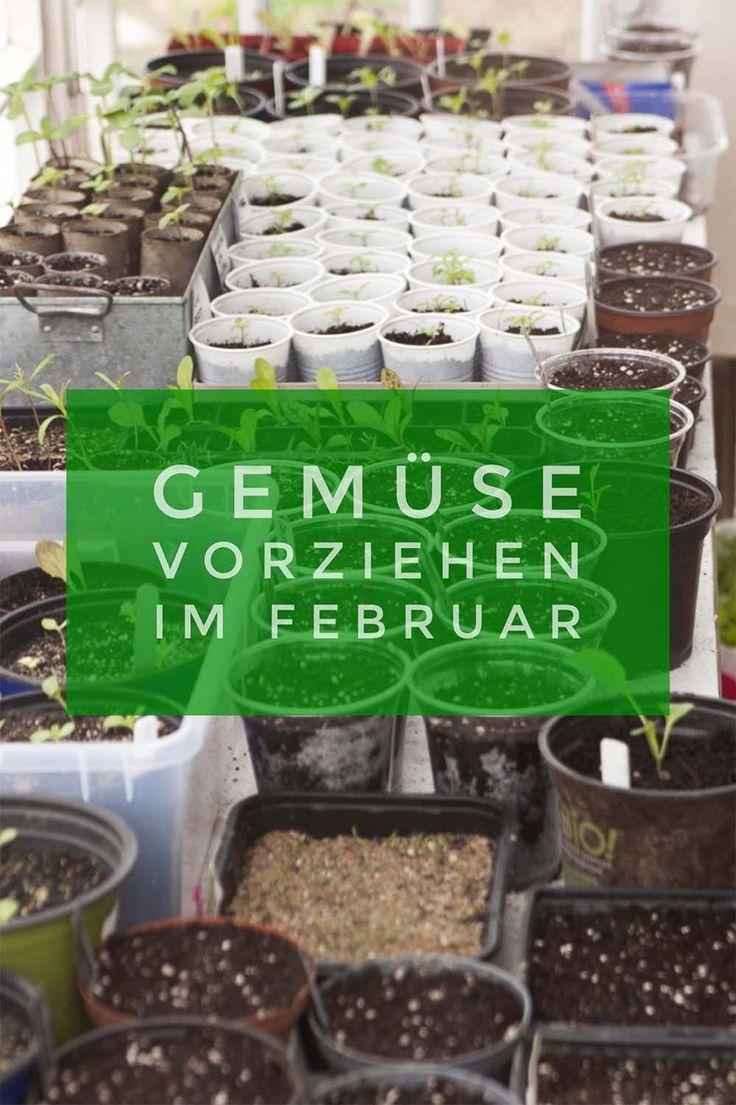 Besondere Gemüsesorten selbst aussäen - Pflanzen vorziehen im Februar #gemüsepflanzen