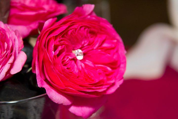 Princess Roses