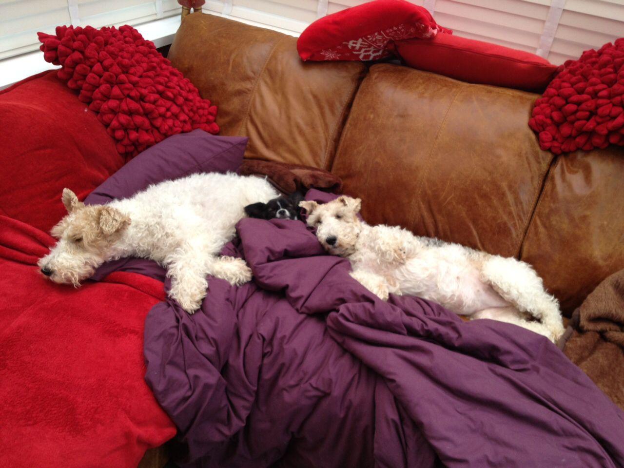 Sleeping dogs! Nicky Jevon