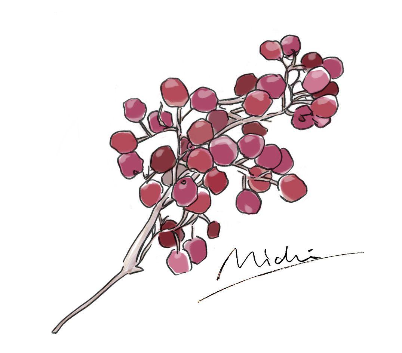 ピンクペッパー Pinkpepper Herbs Botanical Croquis Illustration ファッションイラスト Aloma Spice クロッキー ファッションイラスト