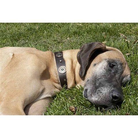 Dragon Eye - 5 colors - Dog Collars - Dog Collar Boutique