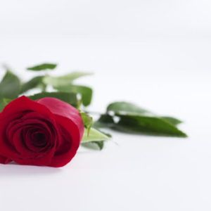 Beautiful Single Red Rose Wallpaper In White Background Rose Flower Hd Red Roses Single Red Rose