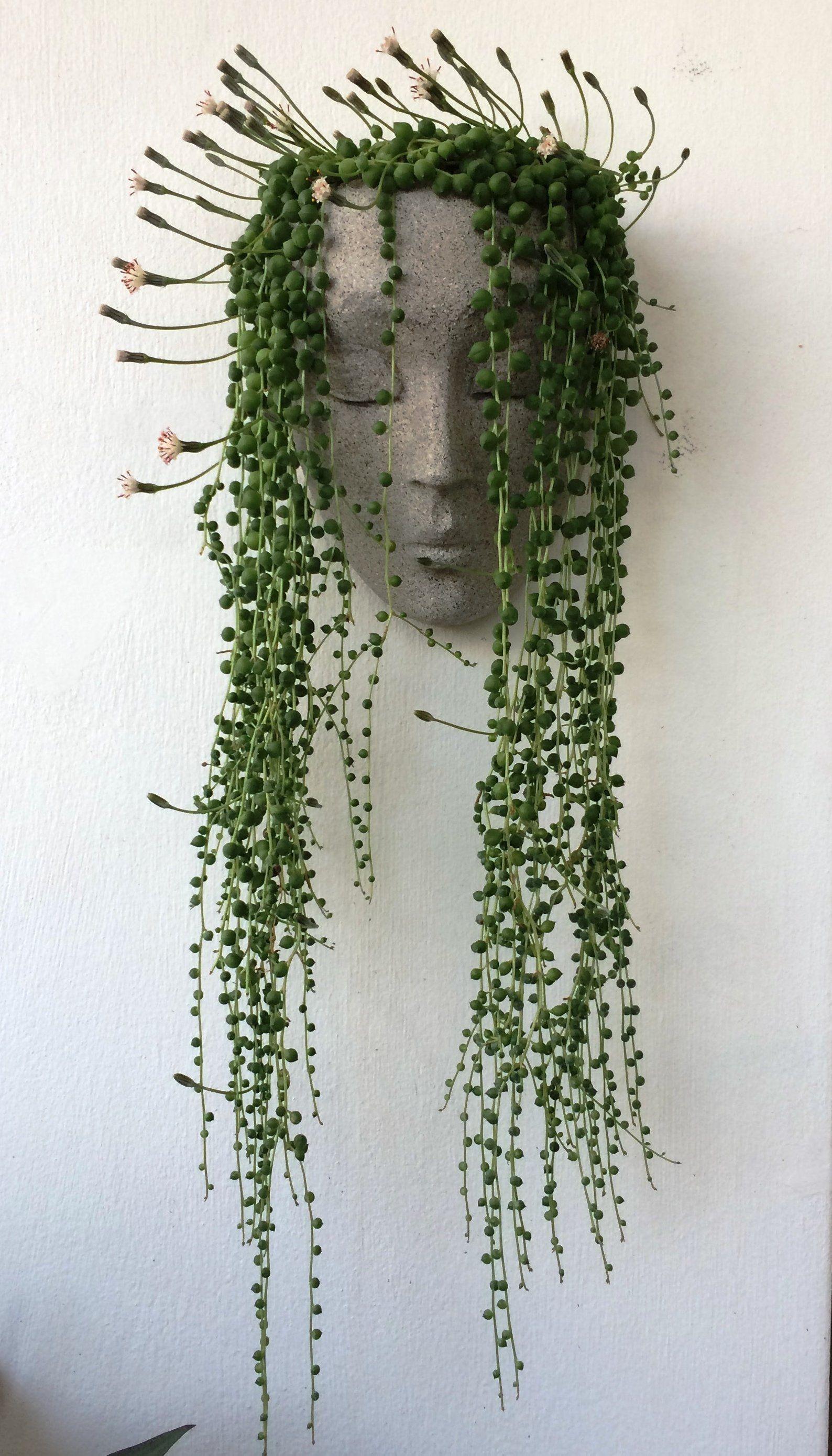 Head Planter Wall Pots For Plants Face Planter Concrete Etsy Succulent Wall Planter Face Planters Garden Wall Decor