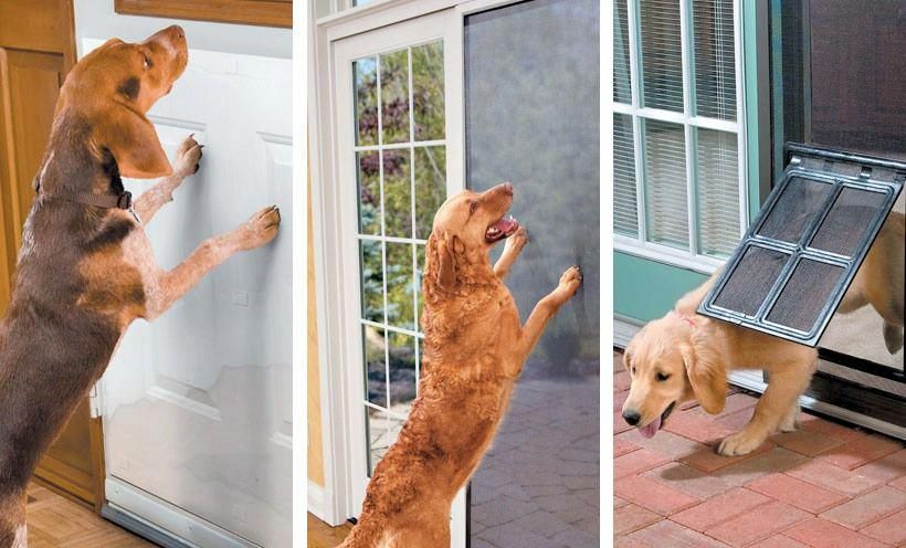 Improvements Hsn Door Protector From Dog Dog Rooms Dogs