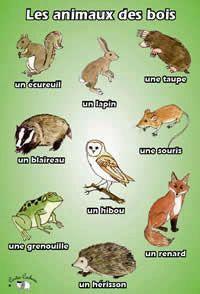Affiche  A3     Les animaux des bois  Poster    Le