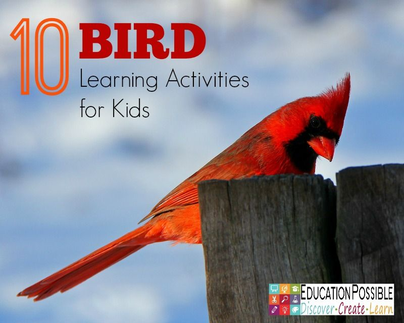 Teachers Can Include Studies Of Birds In Science Geography Art Lessons And More Here Are 10 Fun Educational Bird Learning Activities For Kids