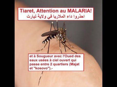 Algerie Tiaret Malaria بعد وفاة سيدة بـ الملاريا وإصابة 3 في تيارت Playbill
