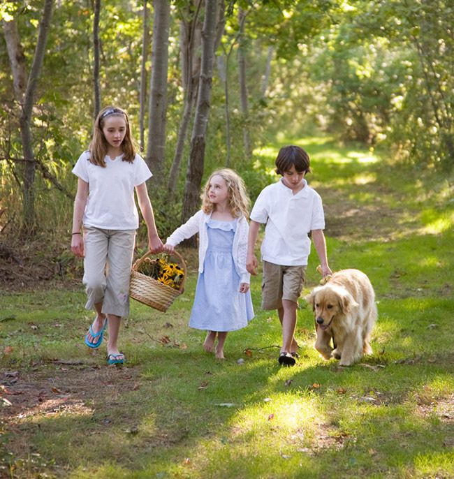 A Summer Walk With Your Dog At Our Pet Friendly Hotel In Maine