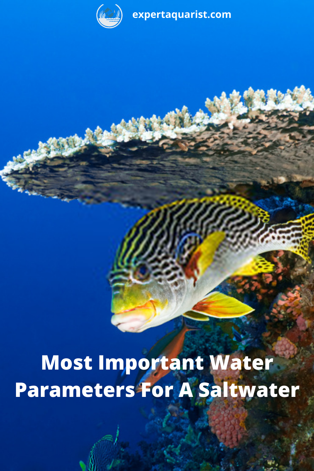 Most Important Water Parameters For A Saltwater Reef Tank Reef Tank Saltwater Tank Marine Aquarium