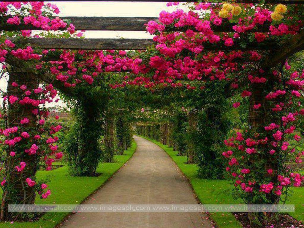 Beautiful Backyard FLOWER Landscaping | Pics Photos - Beautiful Flower  Garden Wallpaper