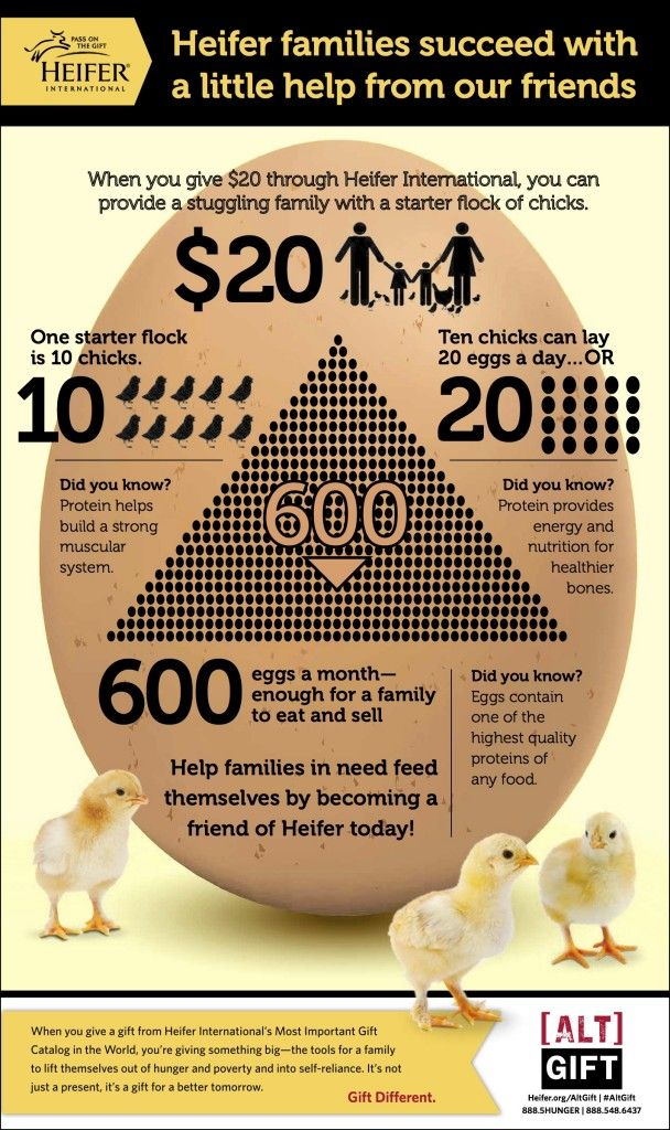 Easter gift infographic the infographic of gifts celebrations find this pin and more on the infographic of gifts celebrations and the likes of it by kasigifts this easter gift different negle Gallery