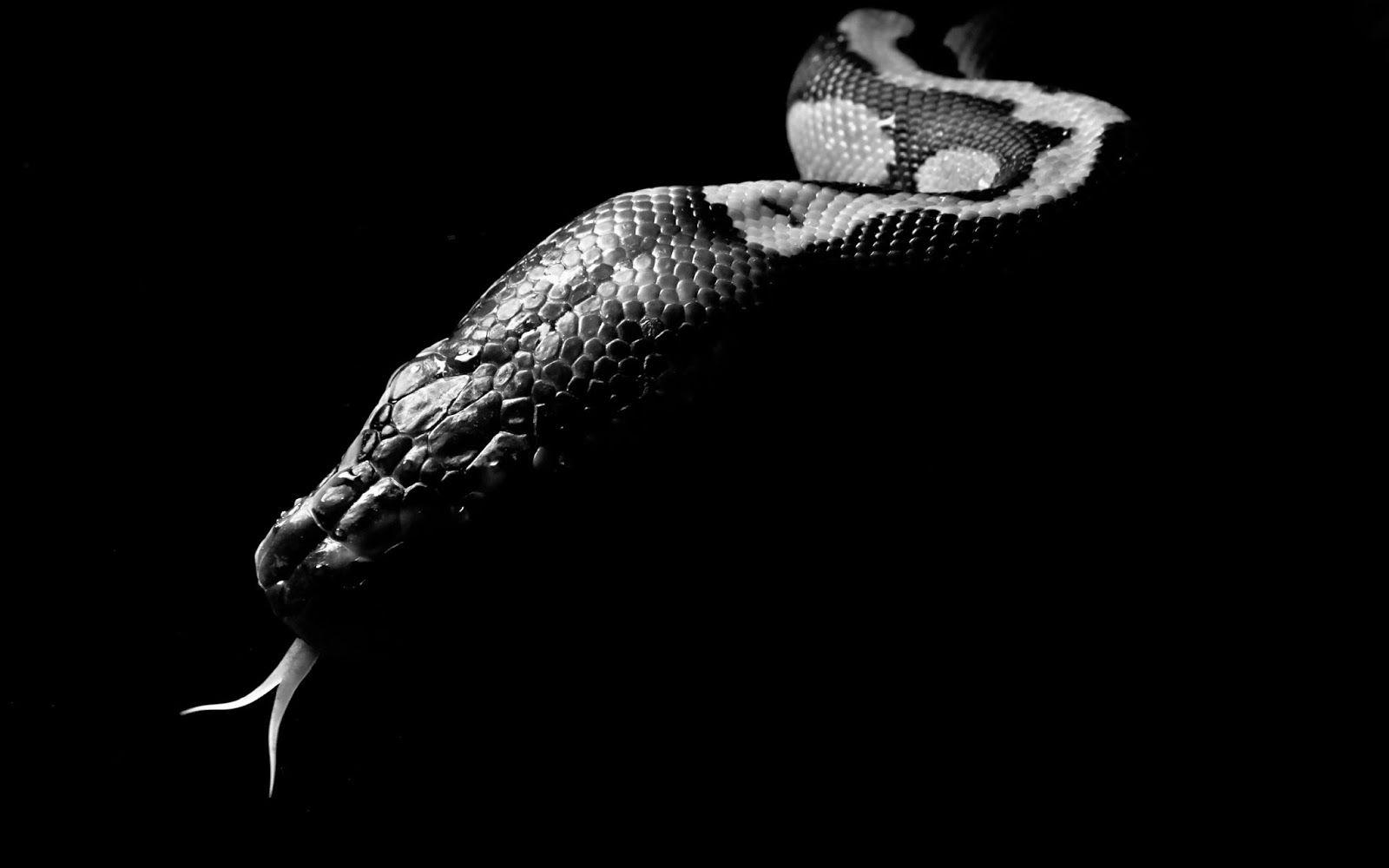 Pin By Matt Frisbie On Photo Inspiration Snake Wallpaper Snake Wallpaper