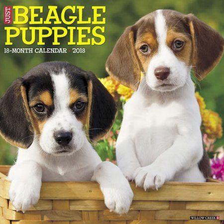 Office Supplies Beagle Puppy Beagle Puppies