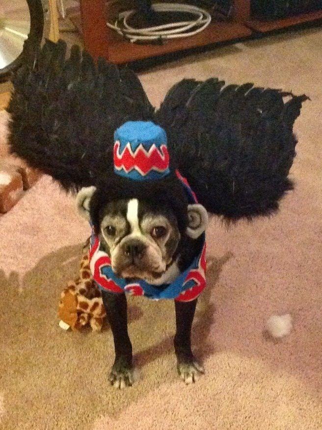 Oz dog & Oz dog | Halloween | Pinterest | Dog Costumes and Animal