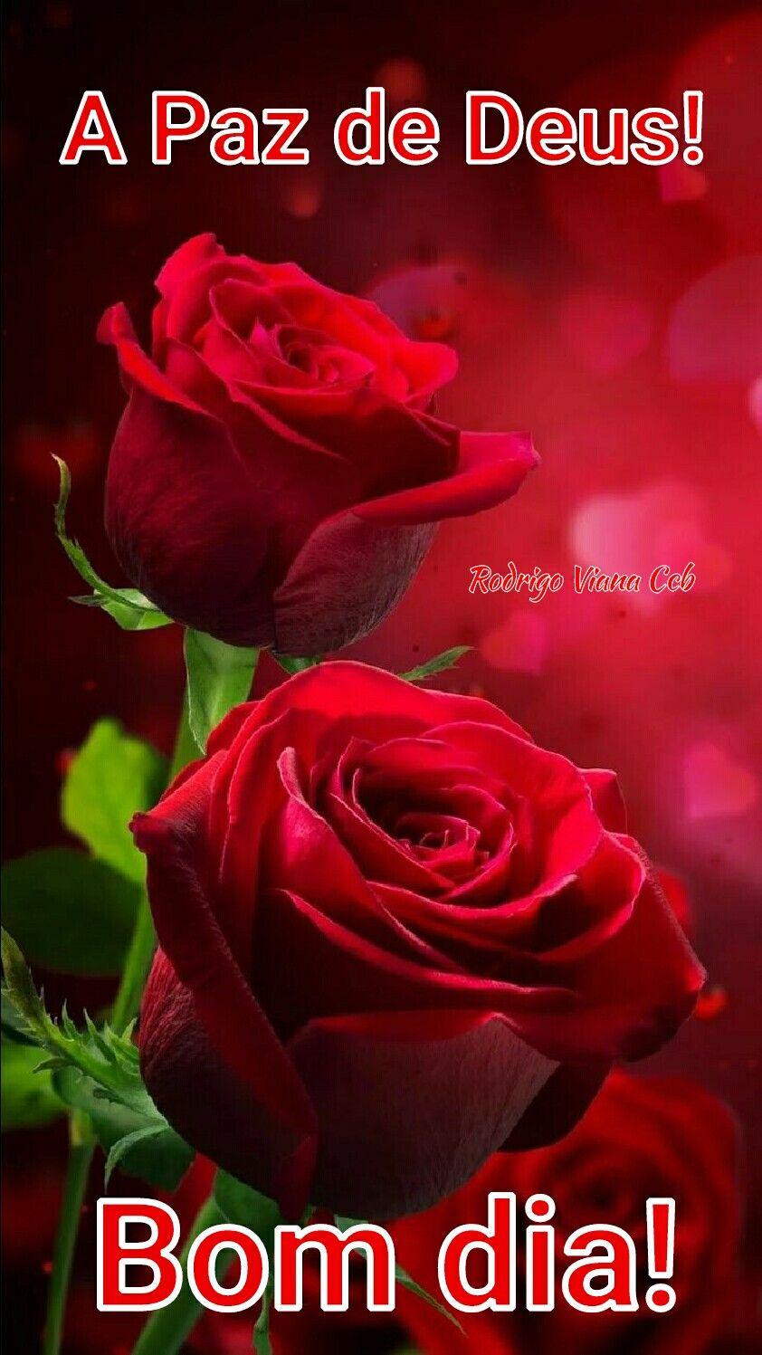Amem Bom Dia Mensagens De Bom Dia Mensagem De Gratidao