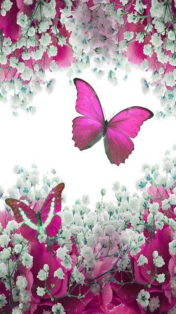 Le piante e gli animali su questa carta da parati in tessuto non tessuto sono disegnati con amore e quasi fotorealistici. Mariposas Dipingere Idee Belle Farfalle Sfondi Carini