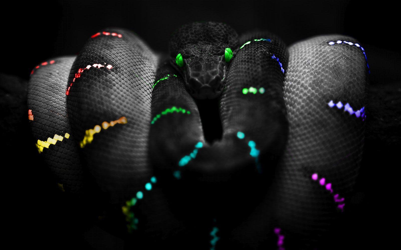 Rainbow Colored Green Tree Python Snake Selective Color