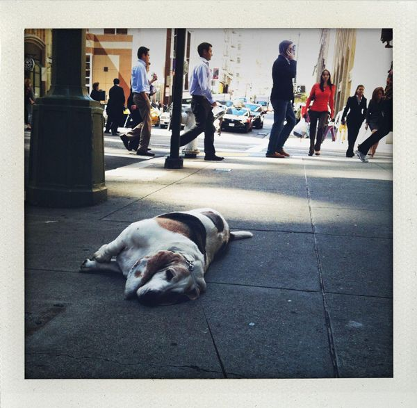 Meet George The Very Tired Basset Hound Our Latest Facebook Obsession Dogster Basset Hound