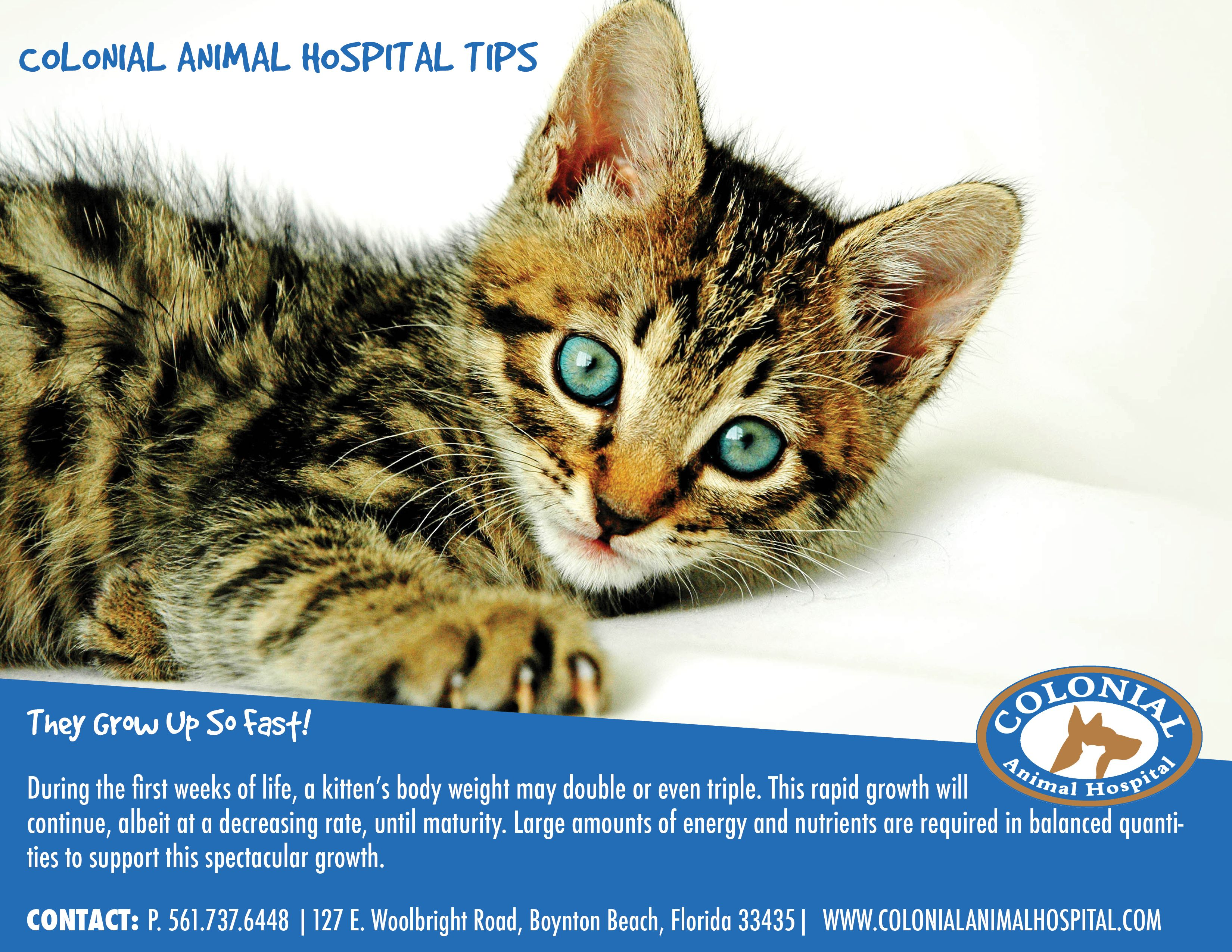 Colonial Animal Hospital Check Out Some Helpful Tips For Kittens Animal Hospital Animals Kittens